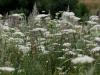 blomstereng-web