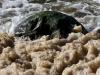 Havskum med sten